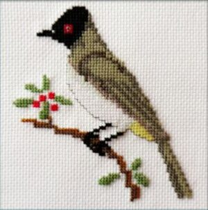 Mollink African Red-eyed Bulbul cross stitch kit